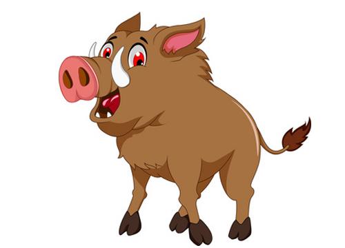 惊恐的野猪
